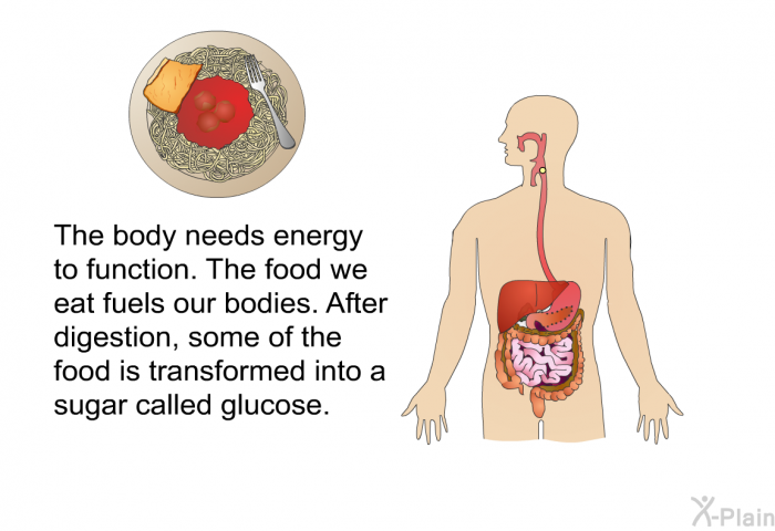 The body needs energy to function. The food we eat fuels our bodies. After digestion, some of the food is transformed into a sugar called glucose.